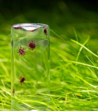 tick-glass-bottle-background-grass